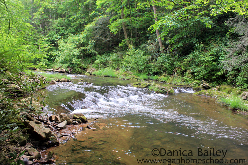 Creek in Cherokee National Forest